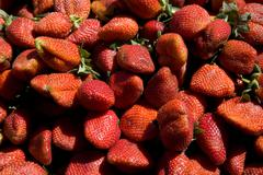 Red ripe strawberries Stock Photos