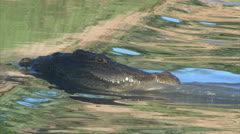 Hunting crocodile in shallow water Stock Footage