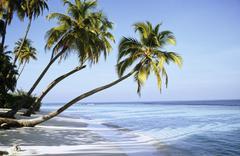 Maldive Islands, kookospalmuja rannalla Kuvituskuvat
