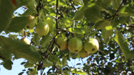Stock Video Footage of apple fruits