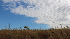 Field of barley Stock Footage