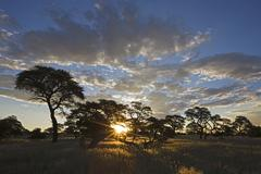 Stock Photo of Africa, Botswana, Sunset over Savanna