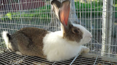 Rabbit in the cage Stock Footage