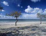 Stock Photo of Italy, Apulia, beach with tree