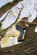 Stock Photo of Boy (6-7) climbing tree, low angle view