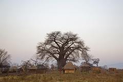 Africa, Sambia, Baobab Tree and Thatched huts - stock photo