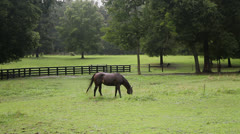 Wet horse grazing in pasture in rain storm Stock Footage