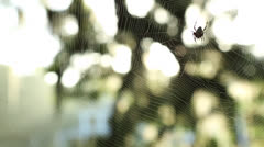 Rack Focus From Spider To House Stock Footage