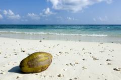Maledives, Gan, Coconut lying at the beach - stock photo