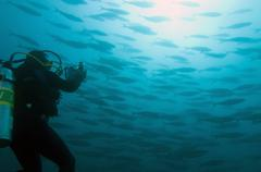 Galapagos Islands, Ecuador, Scuba diver photographing Shoal of Fish - stock photo