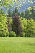 Germany, Bavaria, Ammergauer Alpen, Meadow and woodland - stock photo
