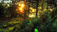 Stock Video Footage of HDR Time Lapse. Spring Sunrise In Forest