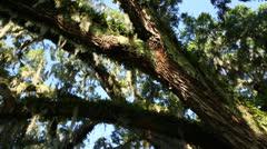 Sliding Shot Of Long Tree Branch Stock Footage