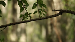 Skinny Tree Branch In Foreground - stock footage