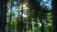 Stock Video Footage of Forest At Dawn. HDR Time Lapse