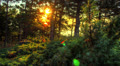 4k. HDR Time Lapse. Spring Sunrise In Forest Footage
