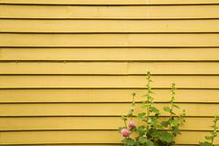 Yellow limber wall and plant Stock Photos
