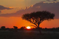 Stock Photo of Africa, Botswana, View of central kalahari game reserve at sunset with a
