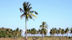 Stock Video Footage of Palms