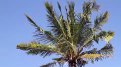 a palm - stock footage