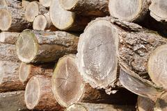 felled logs - stock photo