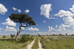 Africa, Botswana, View of central kalahari game reserve with track - stock photo