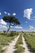 Stock Photo of Africa, Botswana, View of central kalahari game reserve with track