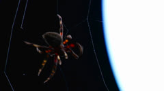Close up of a spider building a web. Stock Footage