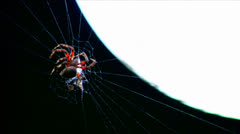 A spider builds a web in time lapse. Stock Footage
