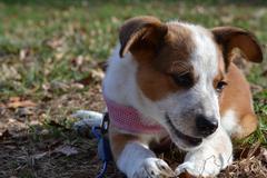 Puppy Smile - stock photo