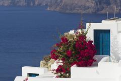 Greece, Cyclades, Thira, Santorini, Bougainvillea and houses with Aegean sea Stock Photos