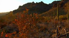 The Mexico, Arizona, Baja or Mojave desert studded with cactus. - stock footage