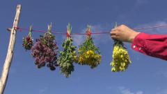 Hanging  medical herb bunch on string. Healthy life concept Stock Footage