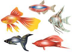 aquarium fish - stock illustration