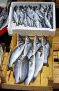 Fresh sprats on a market stall Stock Photos