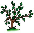 Stock Illustration of Deciduous Tree