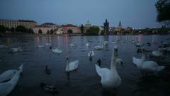 Architecture streets and swans on river of Prague 2 - stock footage
