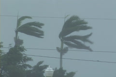 Hurricane Conditions Stock Footage
