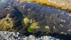 Marine plants on the rocks filmed with slider Stock Footage