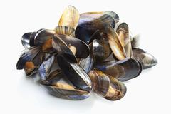 Blue mussels, elevated view - stock photo