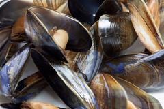 Blue mussels, full frame, close-up - stock photo