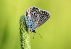 The blue butterfly sitting on the grass - stock photo