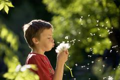 Stock Photo of Boy (6-7) blowing seed pod, close-up