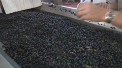 Grapes destemming 2 - stock footage