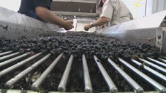 Grapes Clipping 4 closeup Stock Footage