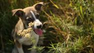 Stock Video Footage of Puppy at the Grass 2