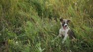 Stock Video Footage of Puppy at the Grass 1