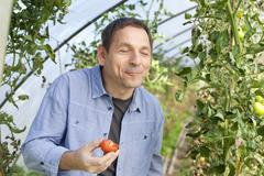 Germany, Saxony, Mature man tasting tomato at the farm - stock photo