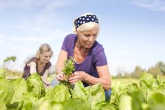 Germany, Saxony, Women working at the farm - stock photo