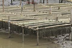 shellfish farm, thailand . - stock photo